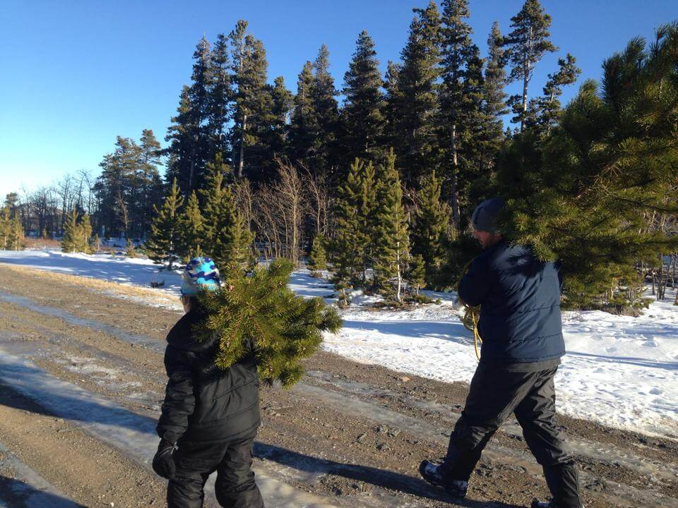 The boys carrying the trees to the truck