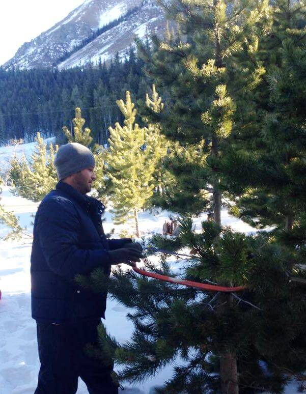 Sawing down our tree
