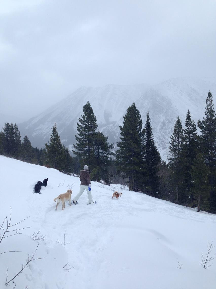 Tawny and the dogs lead the way down after hitting a recent avalanche area