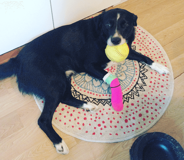 Another Fur Baby Down- How to Treat a Torn Pad