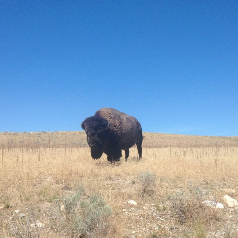 Bison, Gnats & Epic Views on Antelope Island