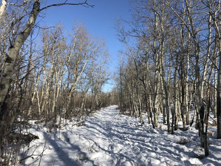 Winter Walk on Wishbone Trail